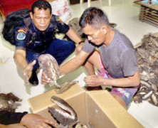 Arrested Manta Ray Trader